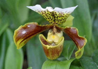 orchideen_rf_002