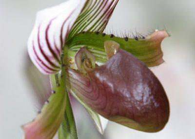 orchideen_rf_004