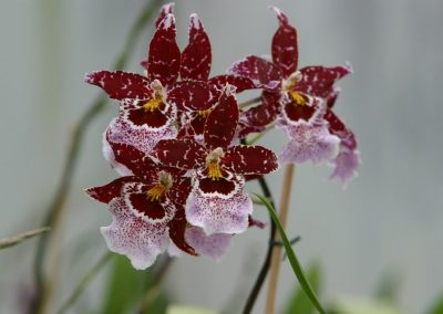 orchideen_rf_006
